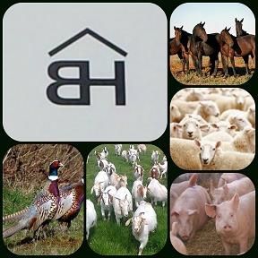 BEAVER HILL AUCTION SERVICES LTD. Logo